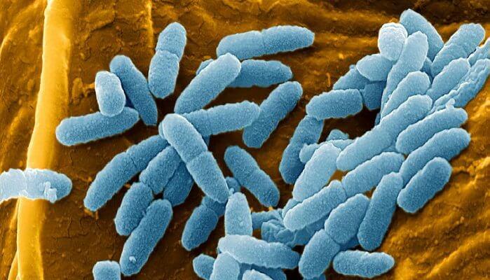 reduce pseudomonas contamination